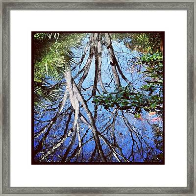 #reflection #tree #cool #popularphoto Framed Print