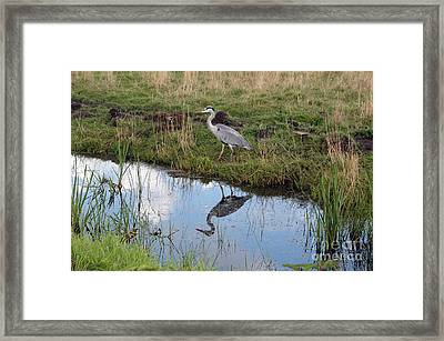 Framed Print featuring the photograph Reflection by Vilas Malankar