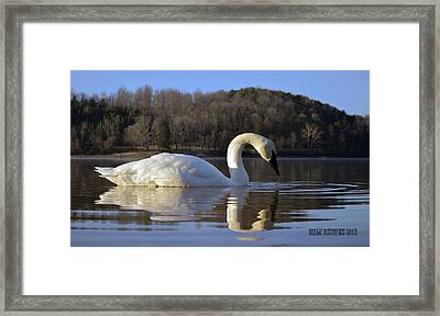 Framed Print featuring the photograph Reflections by Brian Stevens