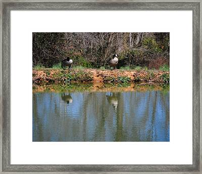 Reflections Framed Print by Jai Johnson