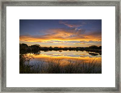 Reflections Of Gold  Framed Print