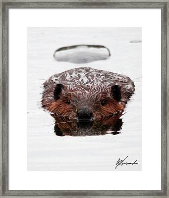 Reflections Framed Print by Sarah  Lalonde
