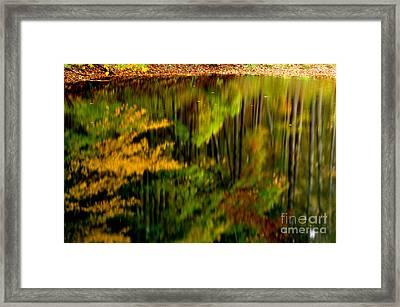 Reflections Framed Print by Thomas R Fletcher