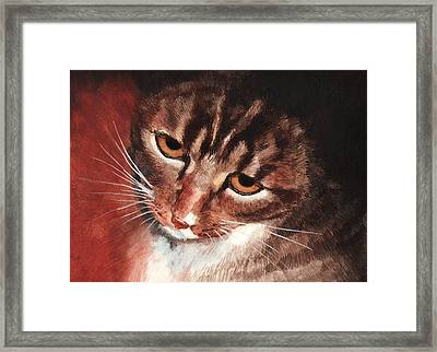 Reflective Kitty Framed Print by Tricia Griffith