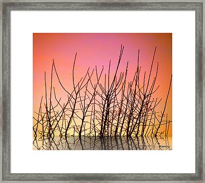 Reflects In Nature Framed Print