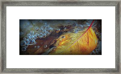 Refreshed.. Framed Print by Al  Swasey