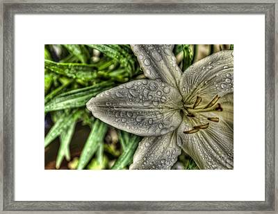 Framed Print featuring the photograph Refreshed by Joetta West