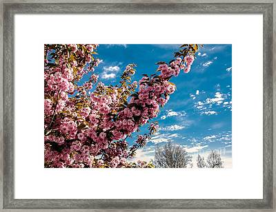 Refreshing Framed Print by Robert Bales
