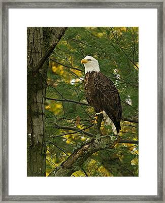 Framed Print featuring the photograph Regal by Judy  Johnson