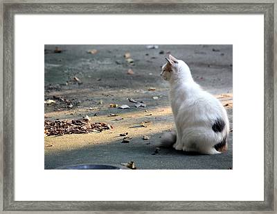 Framed Print featuring the photograph Regal by Rdr Creative