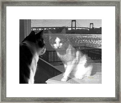 Reggie Reflected Framed Print