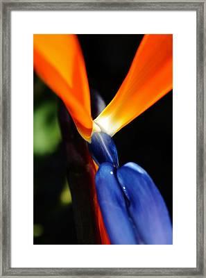 Framed Print featuring the photograph Reginae Strelitzia by Werner Lehmann
