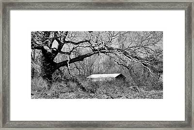 Relax Under My Tree Framed Print
