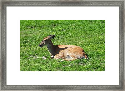 Relaxin Framed Print by Aimee L Maher Photography and Art Visit ALMGallerydotcom