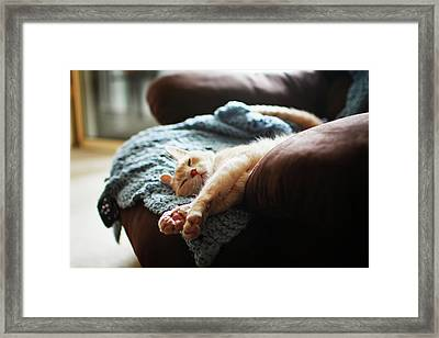 Relaxing Cat Framed Print