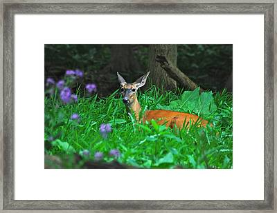 Relaxing In The Morning Framed Print by Michael Peychich