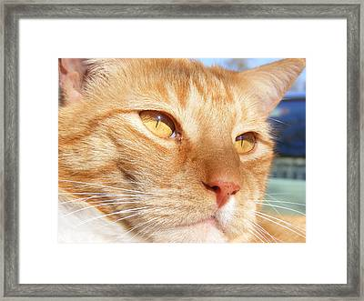 Relaxing In The Sun Framed Print by Pamela Stanford
