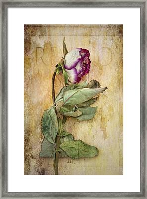 Remembrance Framed Print by Marion Galt