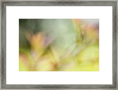 Renewal Of Spring  Framed Print by Heidi Smith