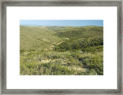 Renosterveld Conservation Area Framed Print by Peter Chadwick