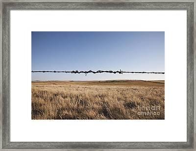 Repaired Strand Of Barbed Wire Framed Print by Jetta Productions, Inc