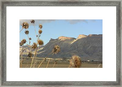 Reprieve From Desert Sun Framed Print