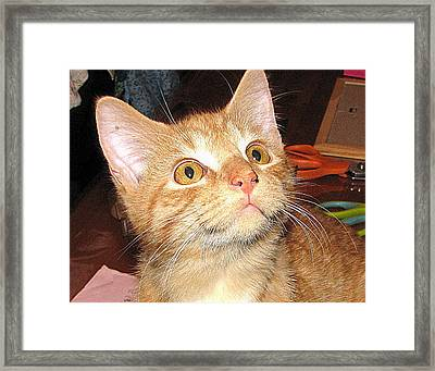 Rescue Kitty Max Framed Print by Victoria Sheldon
