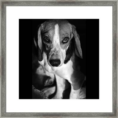 Rescued 6 Framed Print by Laura Melis