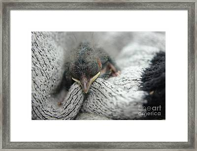 Rescued  Framed Print by Jeff Swan