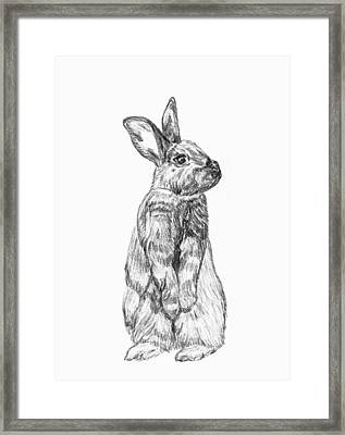 Framed Print featuring the drawing Rescued Rabbit by Katherine Dohnalek
