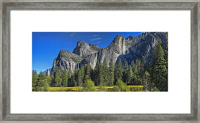 Resplendent Framed Print by Stephen Campbell