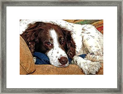Rest Time For Bella Framed Print by James Steele