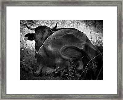 Rest Framed Print by Vlad Dobrescu