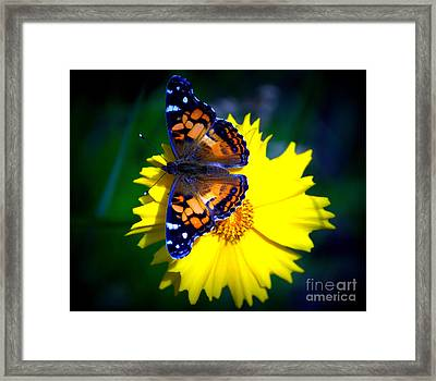 Resting Butterfly Framed Print by Kevin Fortier
