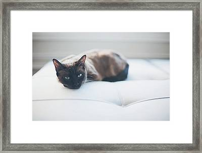 Resting Cat Framed Print by Cindy Loughridge