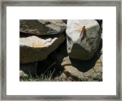 Framed Print featuring the photograph Resting Dragonfly  by Nancy Patterson
