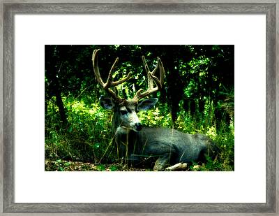 Resting In Nature Framed Print by Sean Duke