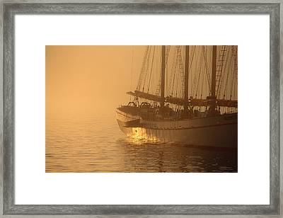 Resting In The Morning Sun Framed Print