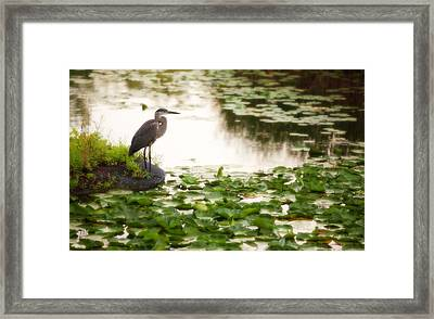 Framed Print featuring the photograph Resting My Wings by Anthony Rego