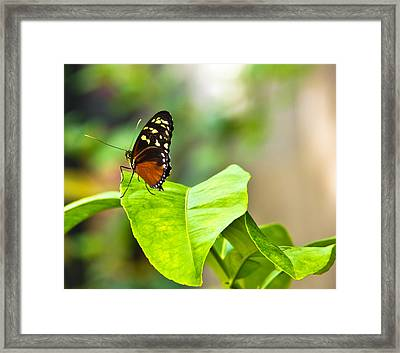 Resting On A Petal Framed Print