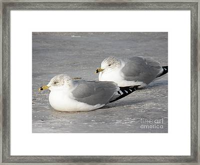 Resting On The Ice Framed Print by Judy Via-Wolff