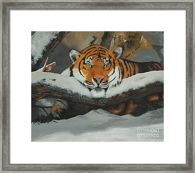 Resting Tiger Framed Print by Thomas Luca