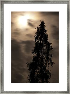 Resurection Framed Print by Arlyn Petrie