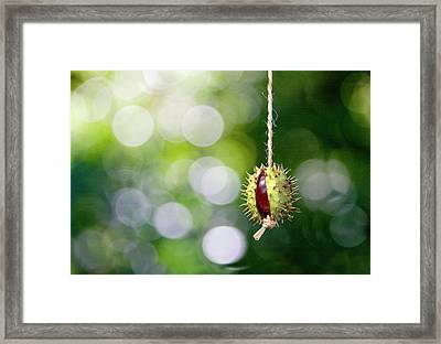 Retro Conker  Framed Print