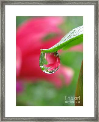 Reunion Photography Framed Print by Tina Marie