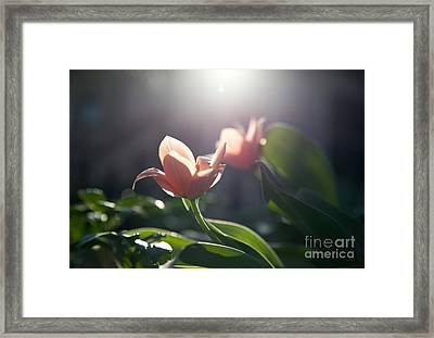 Reverence Framed Print by Rossi Love