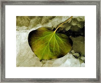 Reverse Ivy Framed Print by Beth Akerman