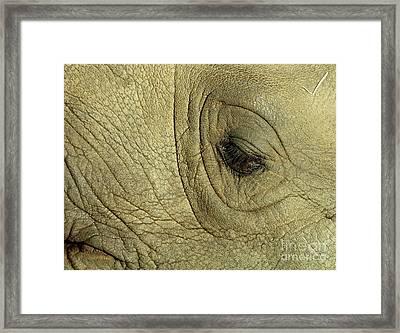 Rhino Eye Framed Print by Marc Bittan