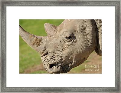 Rhino Framed Print by Marc Bittan