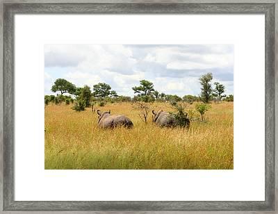 Rhino Pair Framed Print by Deborah Hall Barry